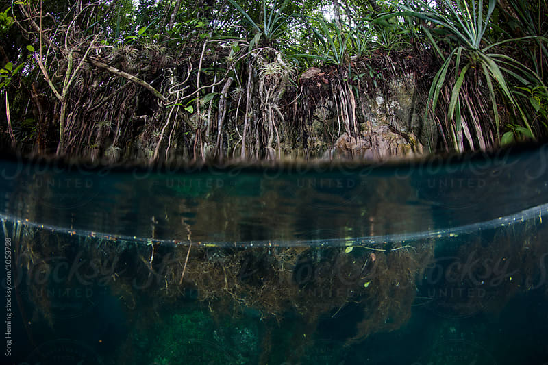 Trees and roots in Mexico's Cenote Angelita by Song Heming for Stocksy United
