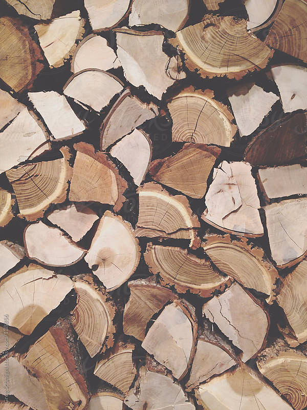 Natural wood and tree texture in nature by Greg Schmigel for Stocksy United