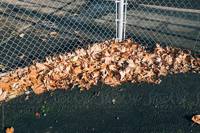 Pile of leaves in autumn and chain-link fence by Paul Edmondson for Stocksy United
