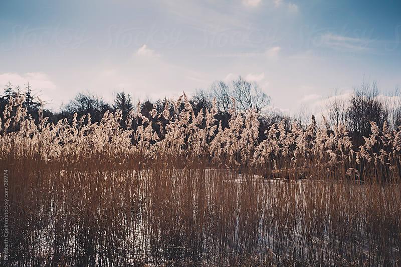 Landscape in winter in Denmark by Elisabeth Coelfen for Stocksy United