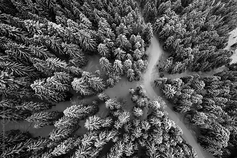 winter landscape from above (vertically) by Wolfgang Lienbacher for Stocksy United