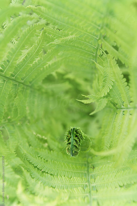 Fern Plants in Spring by Joselito Briones for Stocksy United