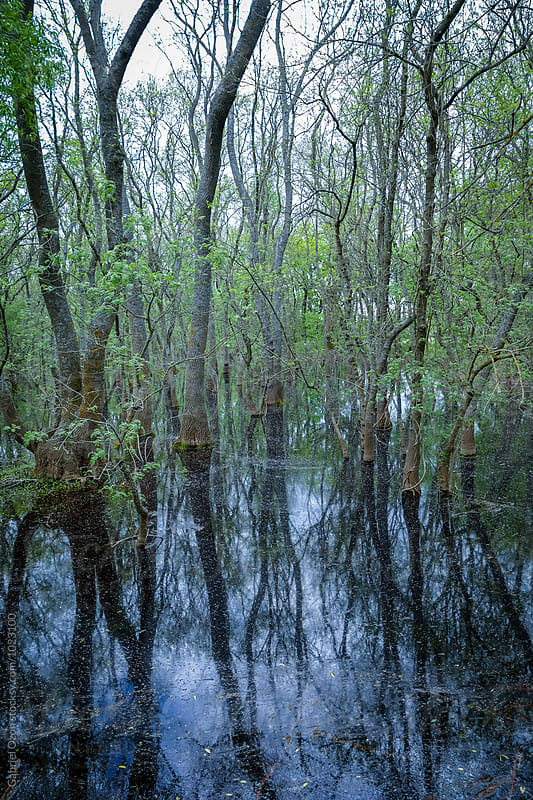 Danube delta by Gabriel Ozon for Stocksy United