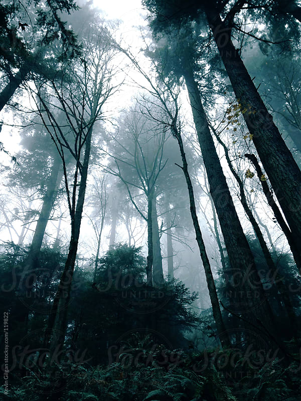 Dark Foggy Trees by Kevin Gilgan for Stocksy United