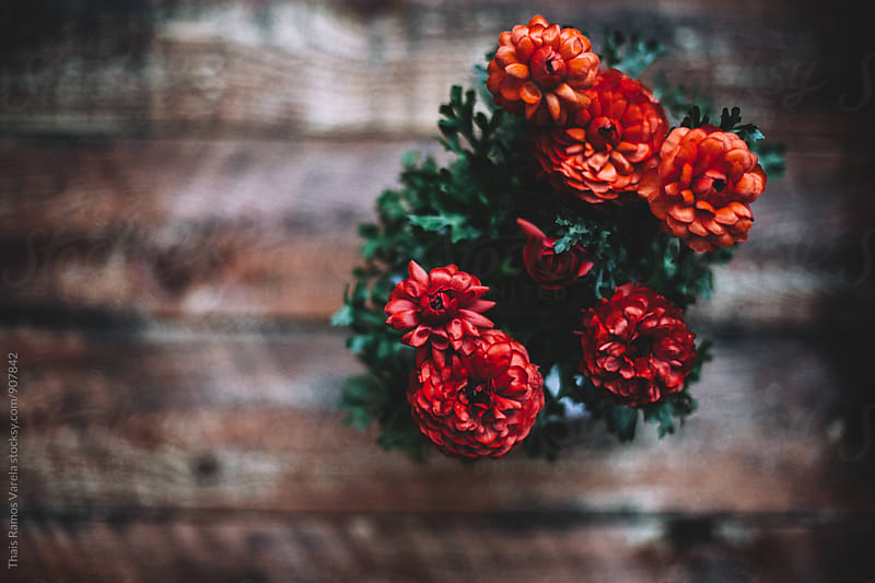 red flowers above wood table  by Thais Ramos Varela for Stocksy United