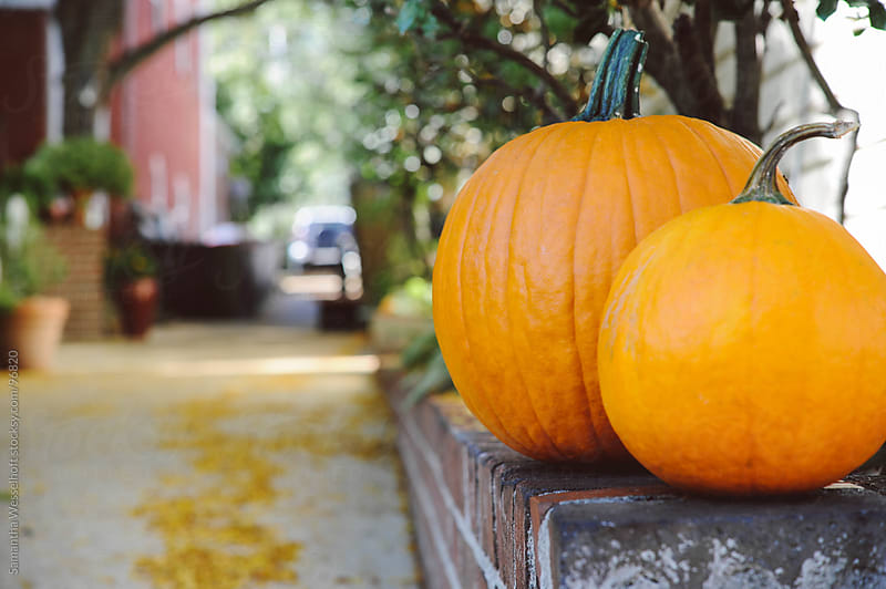 pumpkins along a walkway by Samantha Wesselhoft for Stocksy United