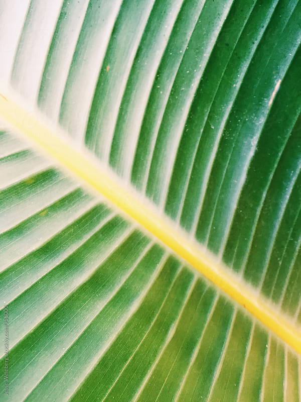 Beautiful Closeup of Green Leaf/Plant by Jesse Weinberg for Stocksy United