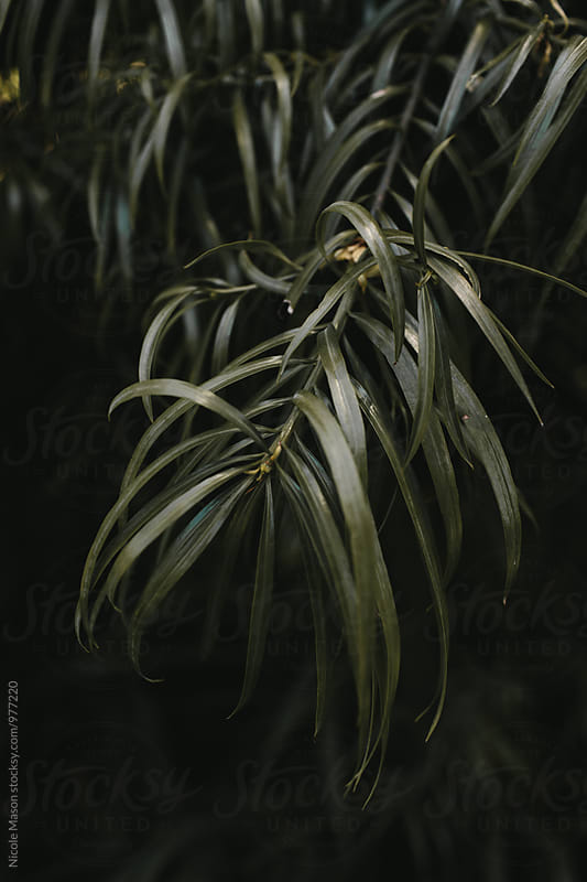 green plants in botanical garden by Nicole Mason for Stocksy United