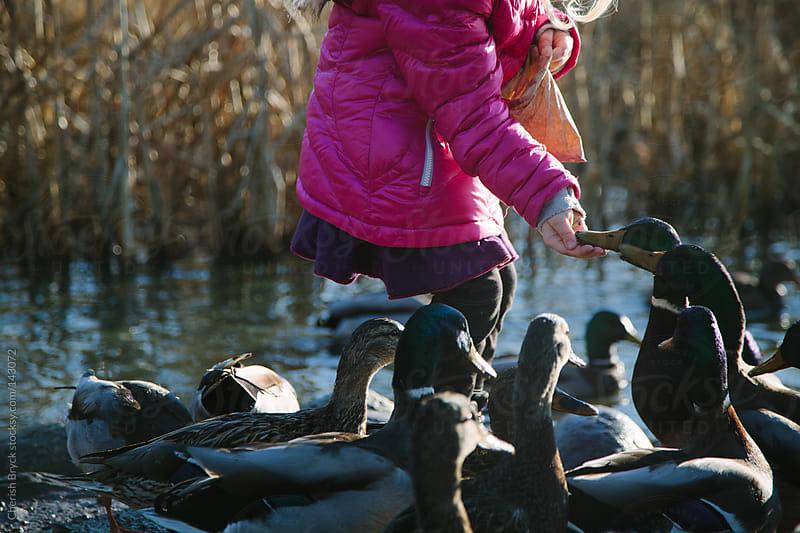 Little girls feeds the ducks. by Cherish Bryck for Stocksy United