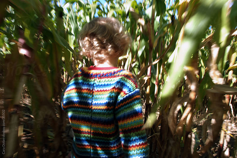 Child wanders through corn field by Cara Dolan for Stocksy United