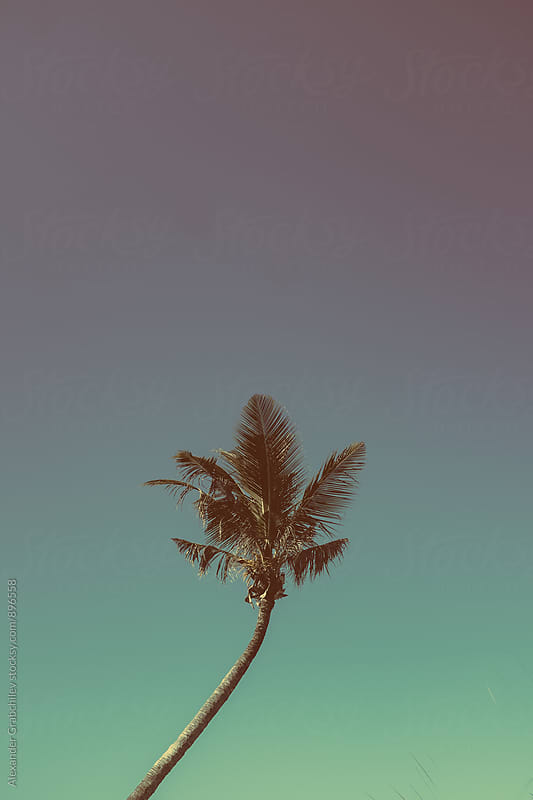 Lonely Tropical Palm Tree by Alexander Grabchilev for Stocksy United