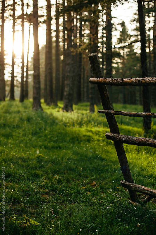 Wooden fence in the forest by Aleksandar Novoselski for Stocksy United