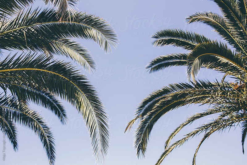 Palm trees leaves in the sky by Maja Topcagic for Stocksy United
