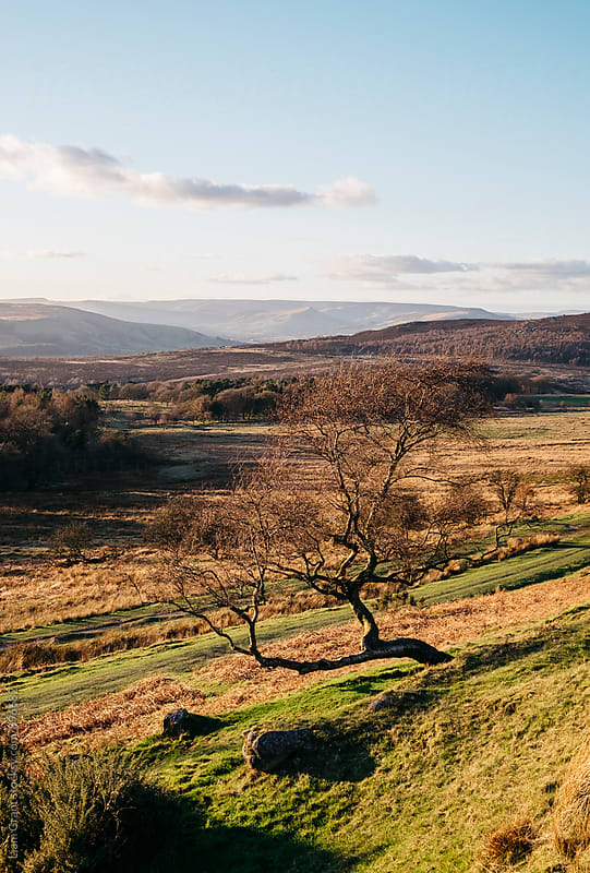Trees on a hillside at sunset. Upper Padley, Derbyshire, UK. by Liam Grant for Stocksy United