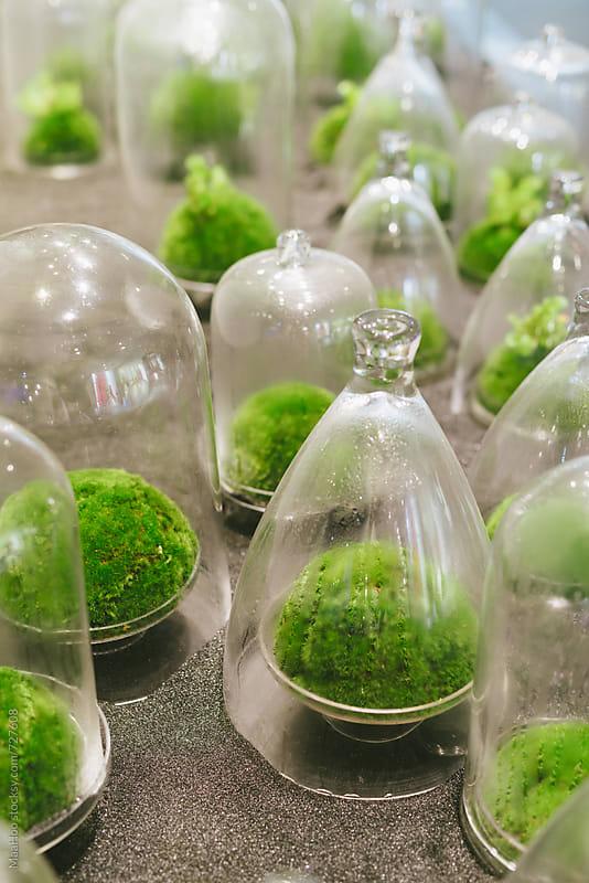 Plants grown in glass bottle by Maa Hoo for Stocksy United