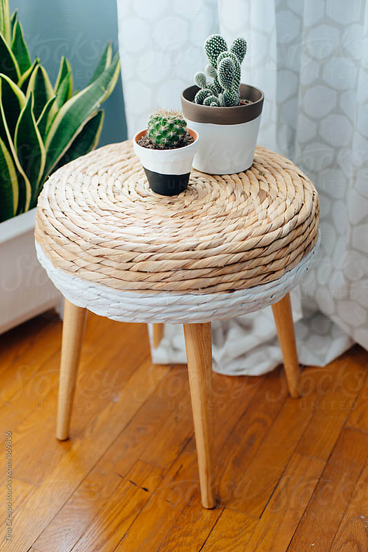 Baby Cactus Plants on Stool by Tina Crespo for Stocksy United
