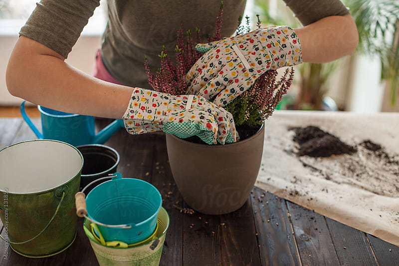 Woman Changing Soil in a House Plant by Mosuno for Stocksy United
