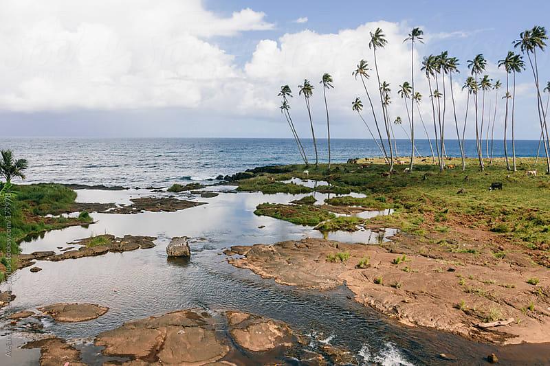 Palm trees and sea on tropical island by Alejandro Moreno de Carlos for Stocksy United