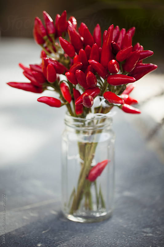 Small red peppers bouquet in glass jar by Laura Stolfi for Stocksy United