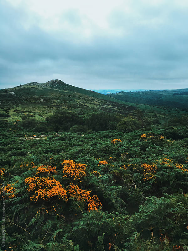 Early Morning Shot of Green Dartmoor National Park Landscape (Devon, England) by Julien L. Balmer for Stocksy United