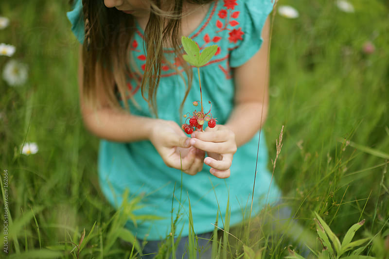 Picking Wild Strawberries by ALICIA BOCK for Stocksy United