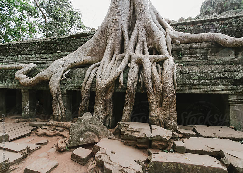 Ta Prohm Temple in Cambodia by Cameron Zegers for Stocksy United