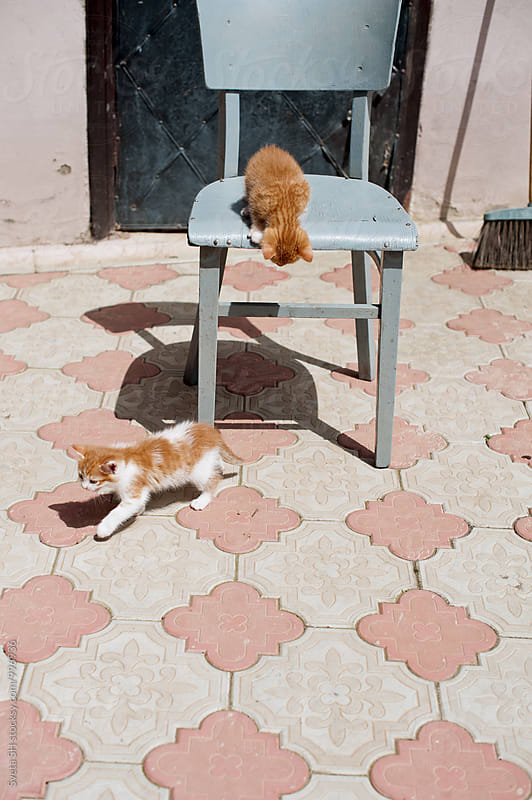 Ginger kittens by Svetlana Shchemeleva for Stocksy United