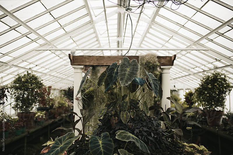plants inside greenhouse by Nicole Mason for Stocksy United