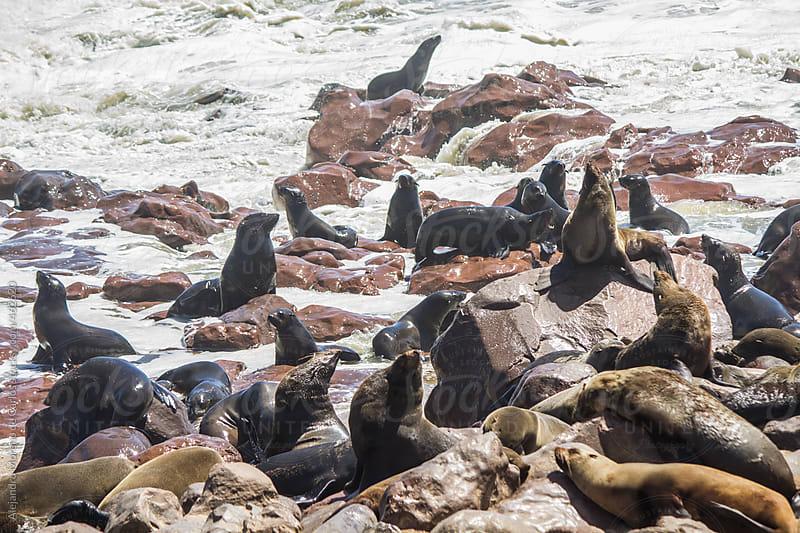 Seals on the coast. Cape Cross, Namibia by Alejandro Moreno de Carlos for Stocksy United