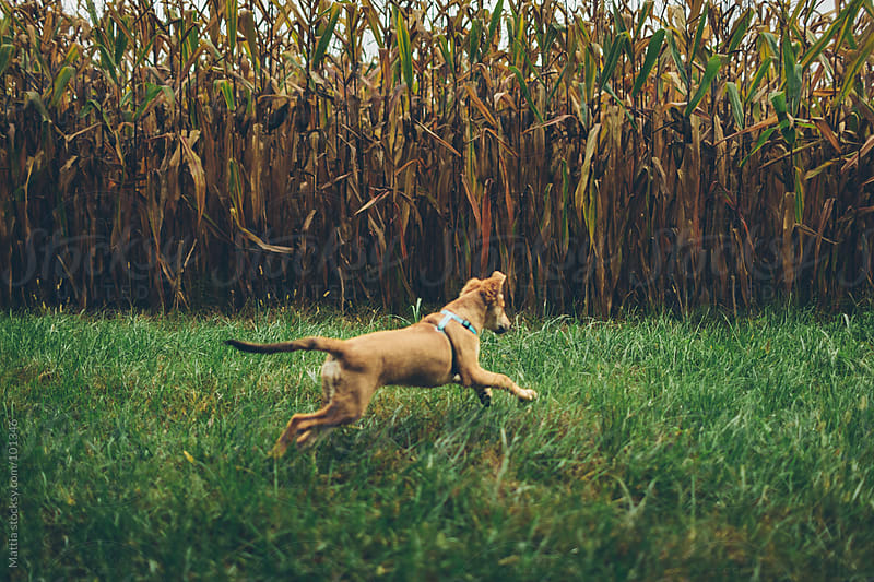 Young Dog Play in front of Plantation by HEX. for Stocksy United