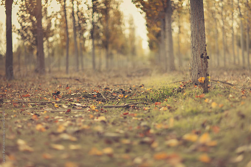 the forest warns us Autumn is coming by Javier Pardina for Stocksy United