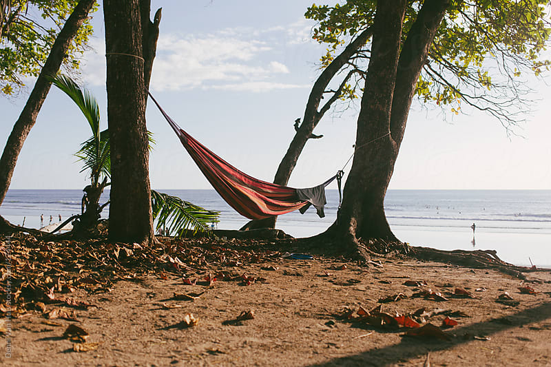 Hammock hanging in the wind in between two trees along the ocean. by Denni Van Huis for Stocksy United