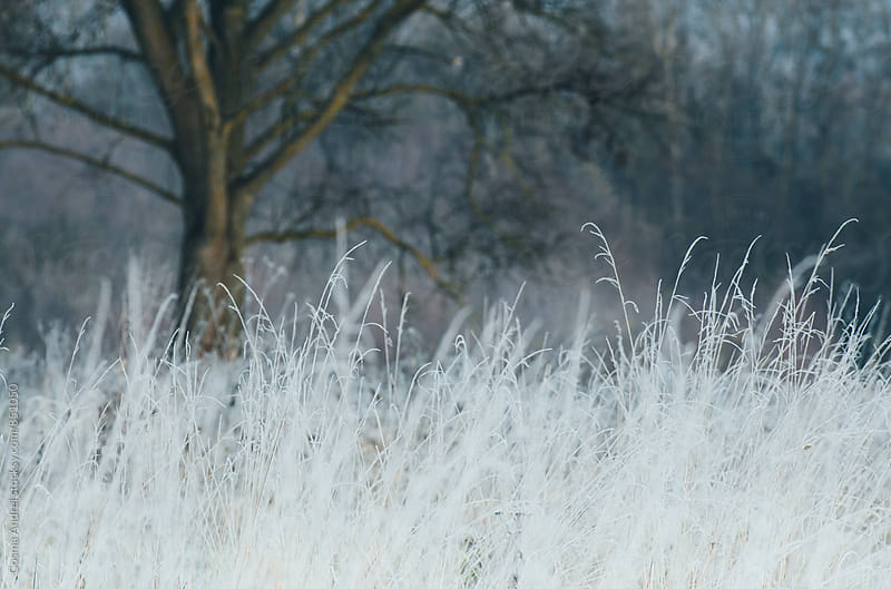 Frozen meadow in winter by Cosma Andrei for Stocksy United