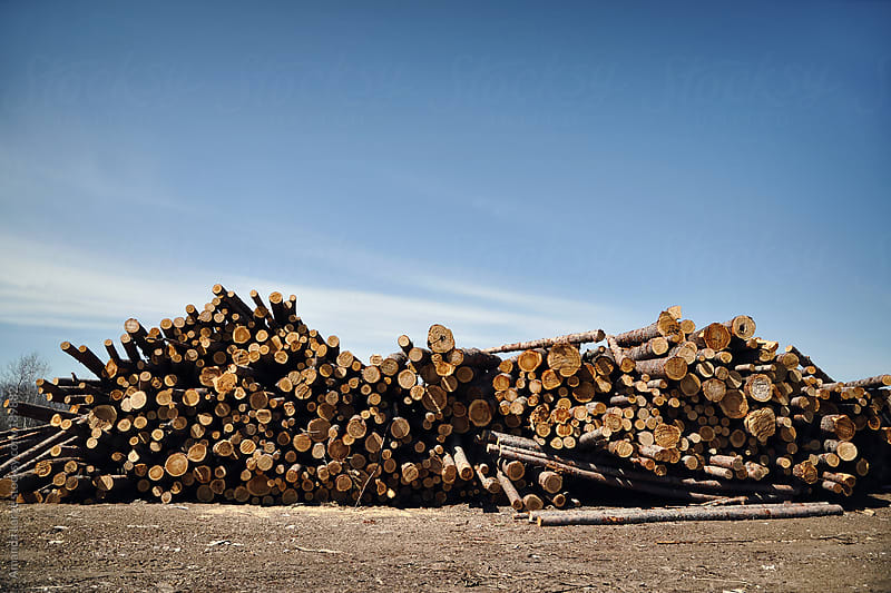 Stack of logs at a lumber yard by Amanda Large for Stocksy United