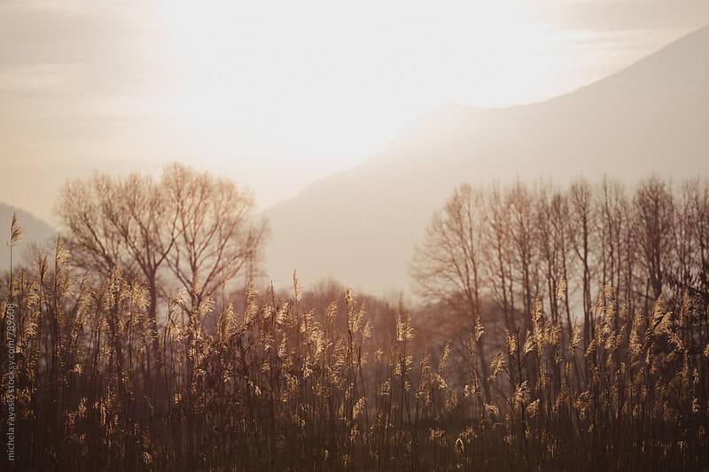 Autumn landscape by michela ravasio for Stocksy United