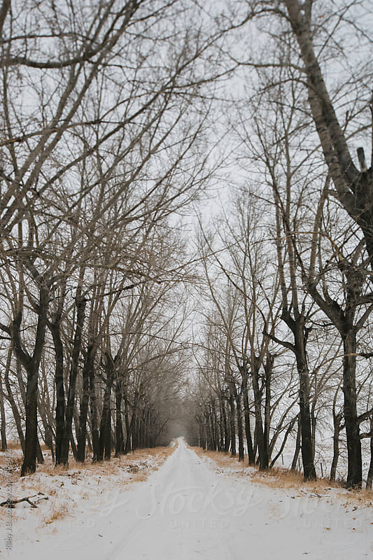 Tilt-shift perspective of a long, tree-lined driveway in winter by Riley J.B. for Stocksy United
