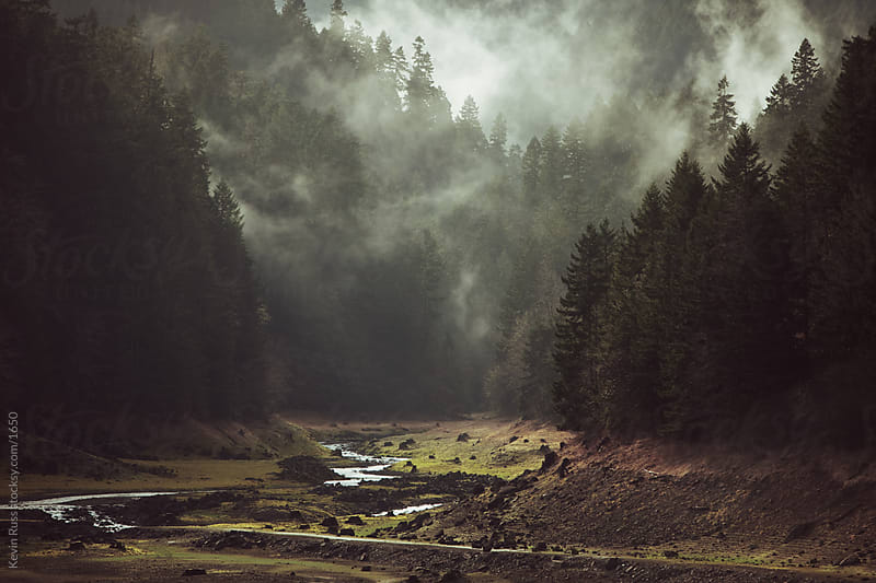 Foggy Forest Creek by Kevin Russ for Stocksy United