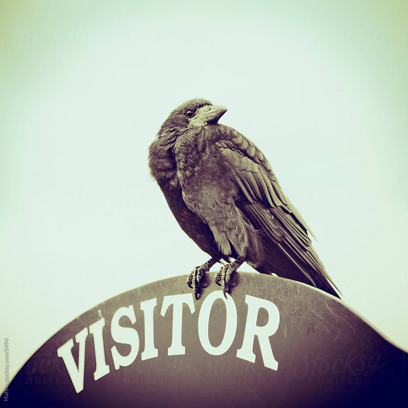 Visitor Sign with Spooky Crow by HEX . for Stocksy United