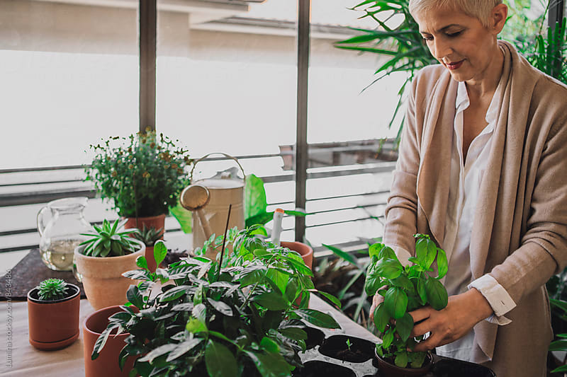 Woman Arranging Potted Herbs by Lumina for Stocksy United