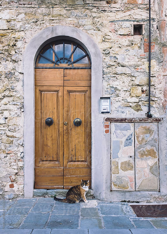 Cat sitting on pavement near with wooden door by Trent Lanz for Stocksy United