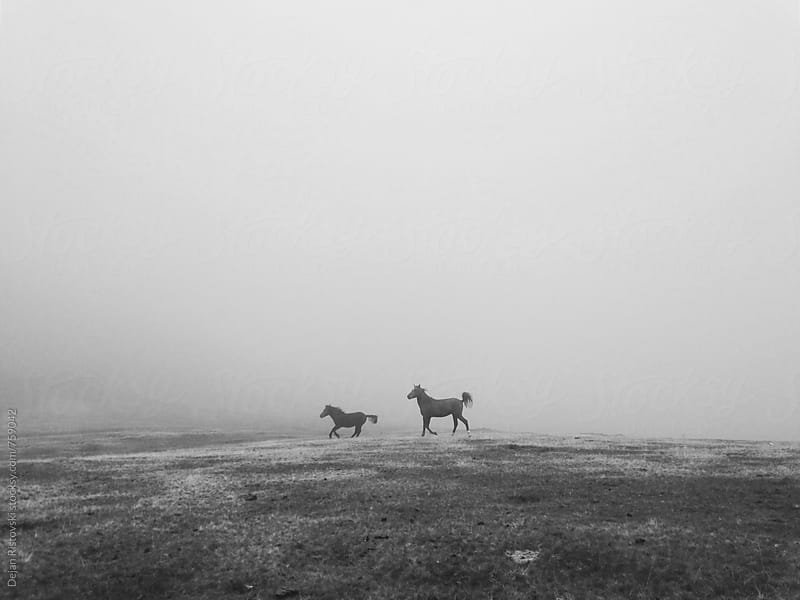 Wild horses running free. by Dejan Ristovski for Stocksy United