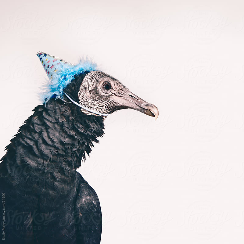 Studio Shot of a Vulture in a Party Hat by Shelly Perry for Stocksy United
