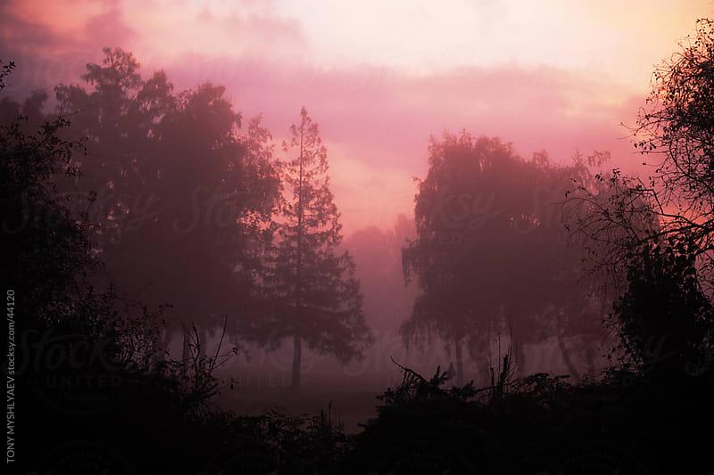 Foggy Sunrise by TONY MYSHLYAEV PHOTOGRPAHY for Stocksy United