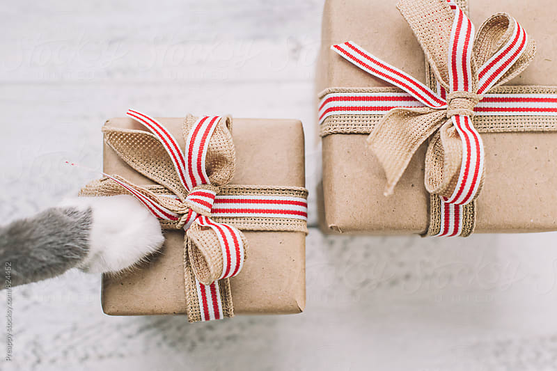 Cat paw on presents by Preappy for Stocksy United