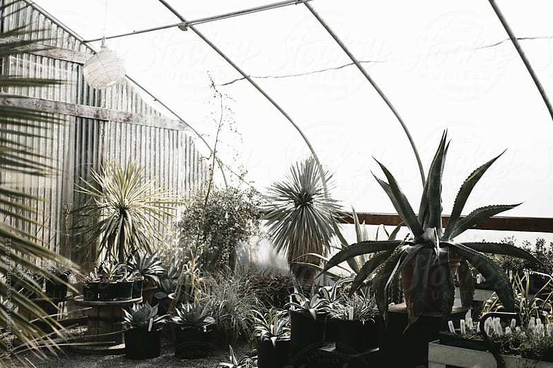 tropical plants in bright light in greenhouse by Nicole Mason for Stocksy United