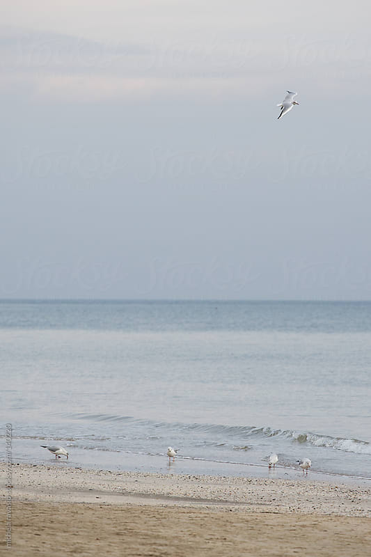 Seagulls along the sea  by michela ravasio for Stocksy United