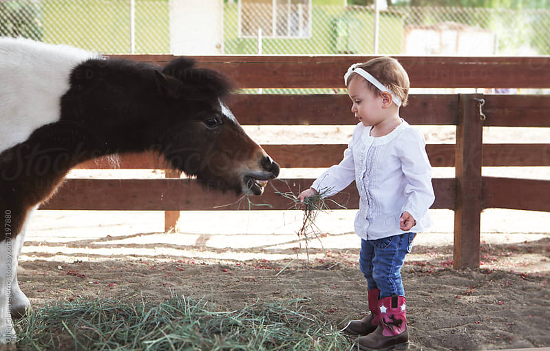Little toddler helping feed a small pony with hay  by Dina Giangregorio for Stocksy United
