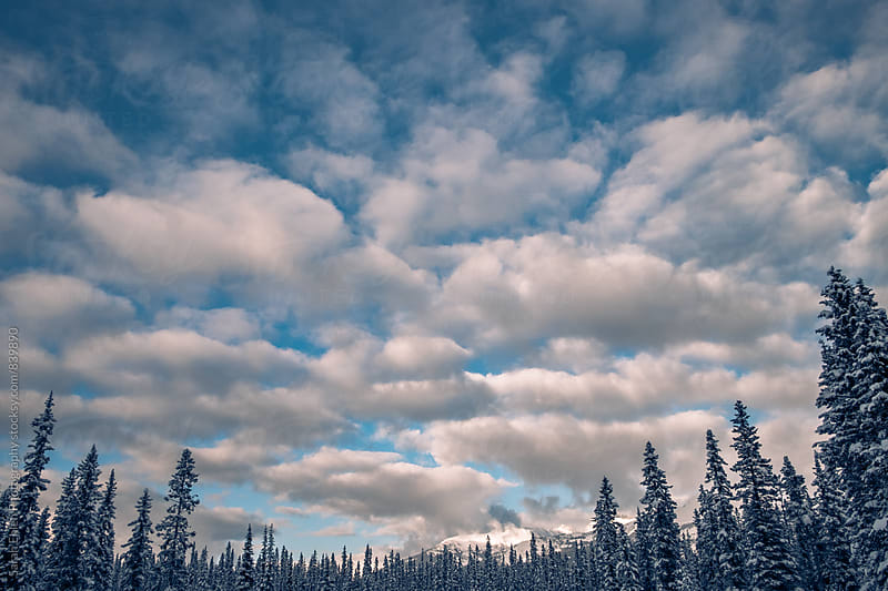 A winter view of sky, clouds, and forest. by Sarah Ehlen Photography for Stocksy United
