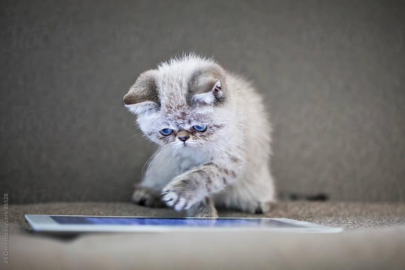 Kitten on ipad by Jill Chen for Stocksy United