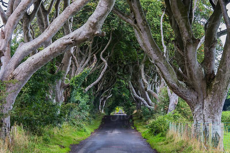 The Dark Hedges II by Marilar Irastorza for Stocksy United
